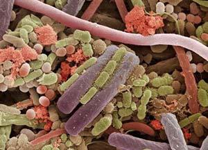 Микробы под микроскопом. фото