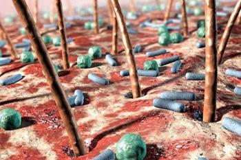 Микробы на руках под микроскопом.