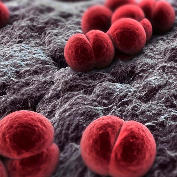 под микроскопом во рту микробы фото