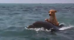 дельфин спасает собаку