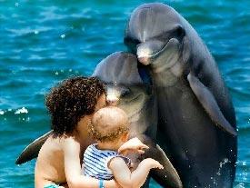 дельфины - классные, весёлые и позитивные животные