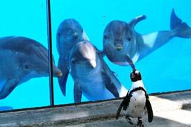 любопытные дельфины и пингвин