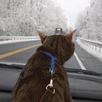 кот смотрит на дорогу